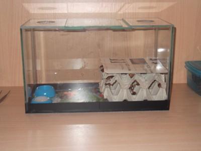 Обустройство аквариума для хомяка своими руками 89